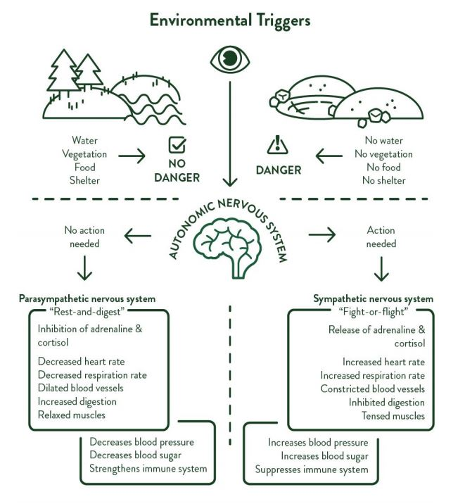 Environmental triggers affect our brains