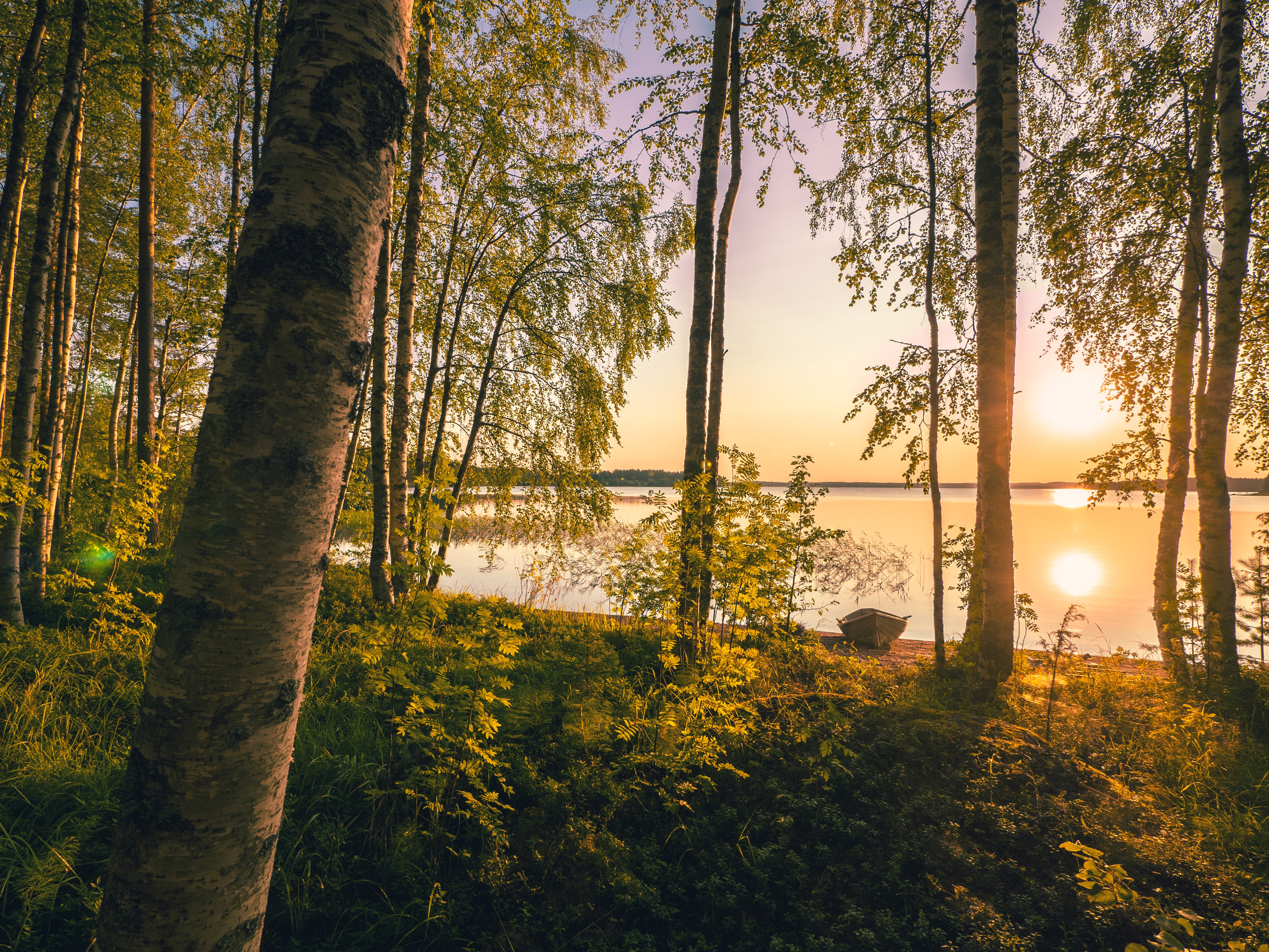 Fresh air in a fresh forest