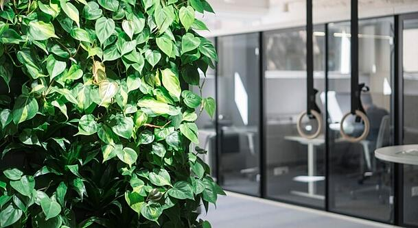 The smart green wall is an atypical environment for plants.