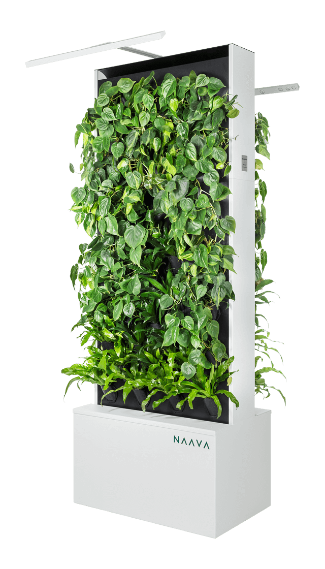 Green walls | Naava