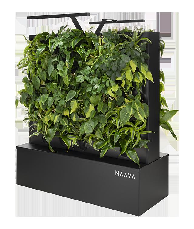 Naava Flow Duo