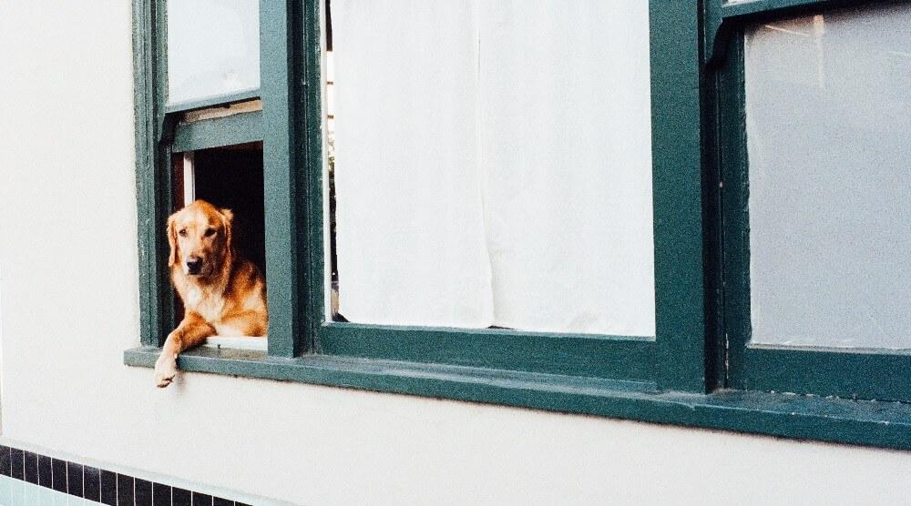 A dog getting some fresh air.