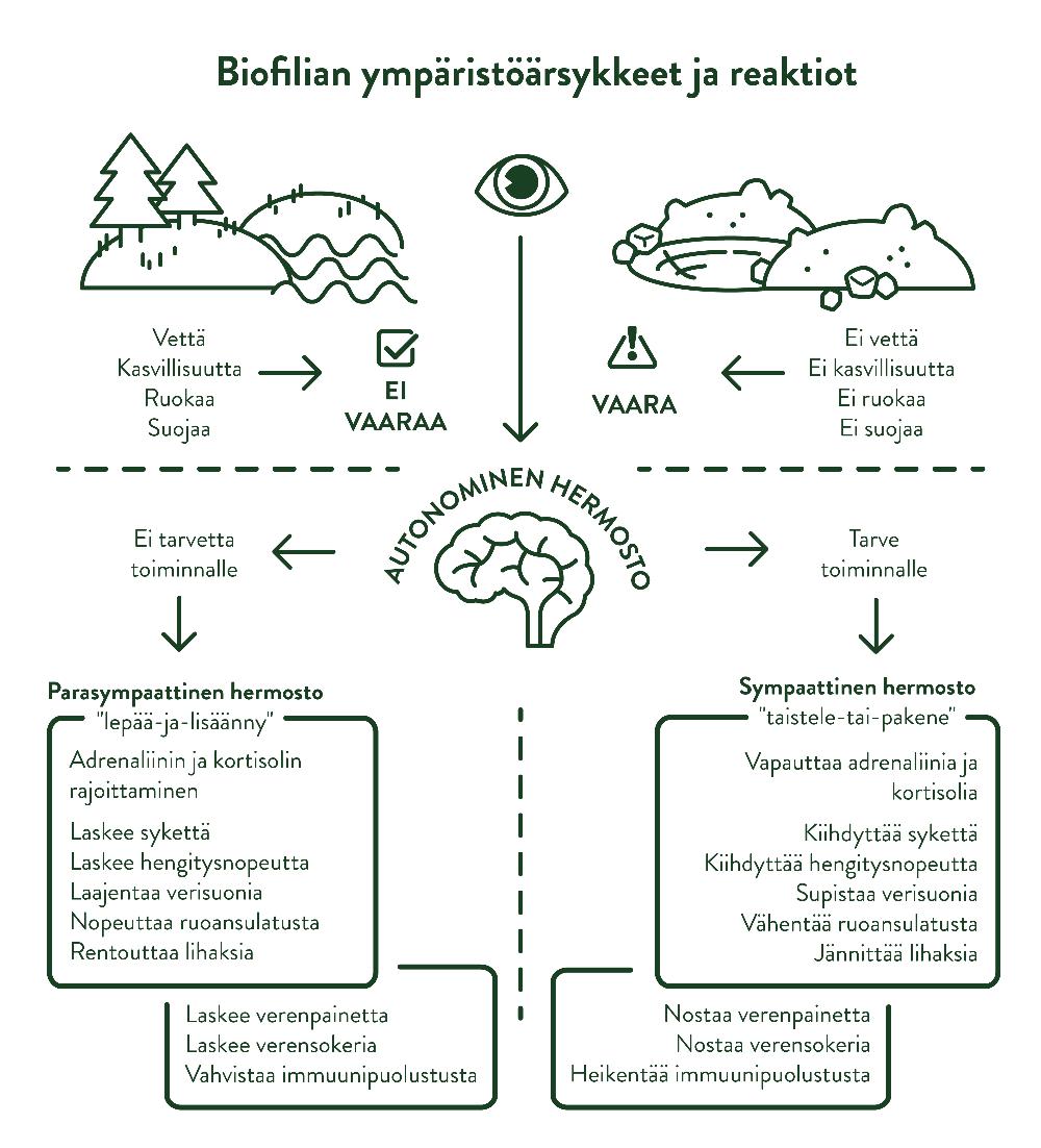 Ympäristön biofiliset ärsykkeet sekä niiden aiheuttamat reaktiot.