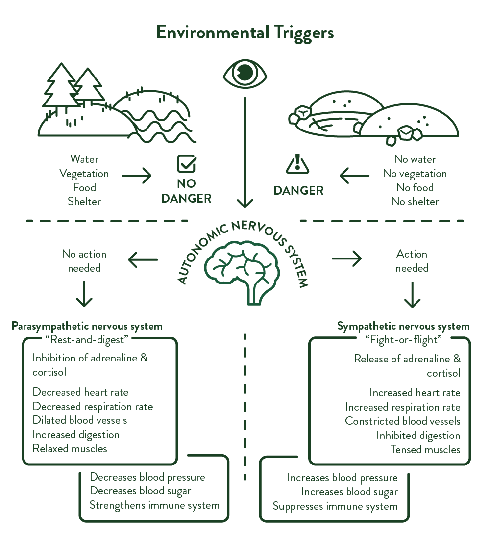 Infograph: Environmental triggers of biophilia and their respective outcomes.