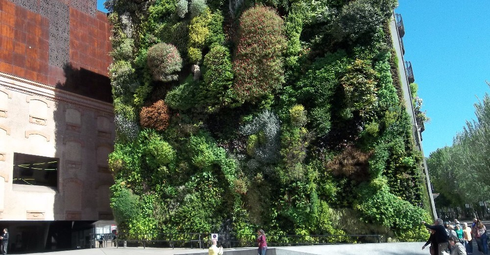 Outdoor green wall in Madrid, designed by Patric Blanc. (Mike Dixon / CC BY-SA 4.0)