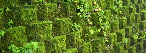 Naturally growing moss wall at Jinguashi historical mine. (Fred Hsu / CC BY-SA 3.0)
