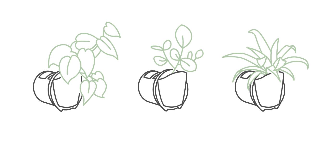 Viherseinissä käytössä olevia kasveja: herttaköynnösvehka (philodendron scandens), kuristajaklusia (clusia rosea), pesäraunioinen (asplenium antiquum).