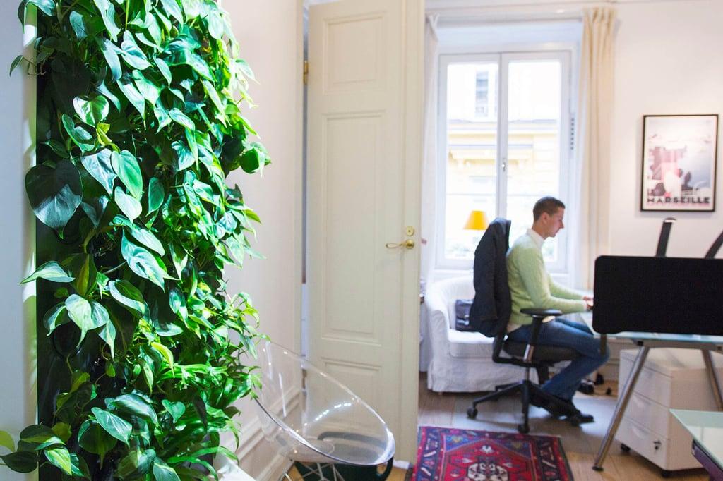 Sisäilmaa puhdistava Naava-älyviherseinä toimistolla