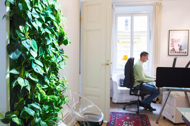 Indoor air purifying Naava smart green wall at an office.