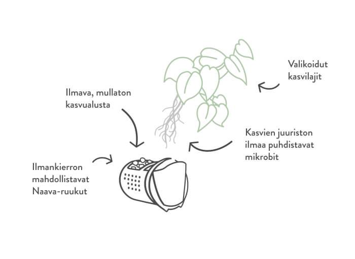 Naava-biofiltteri, luonnollinen ilmanpuhdistaja
