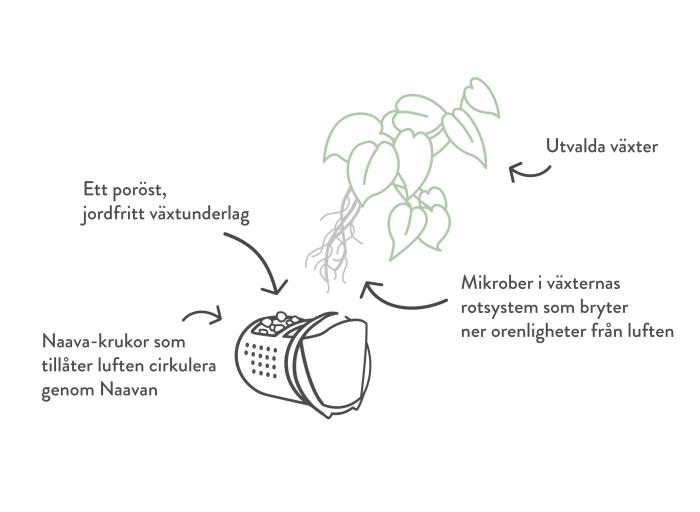 Naava-biofilter, en naturlig luftrengörare.