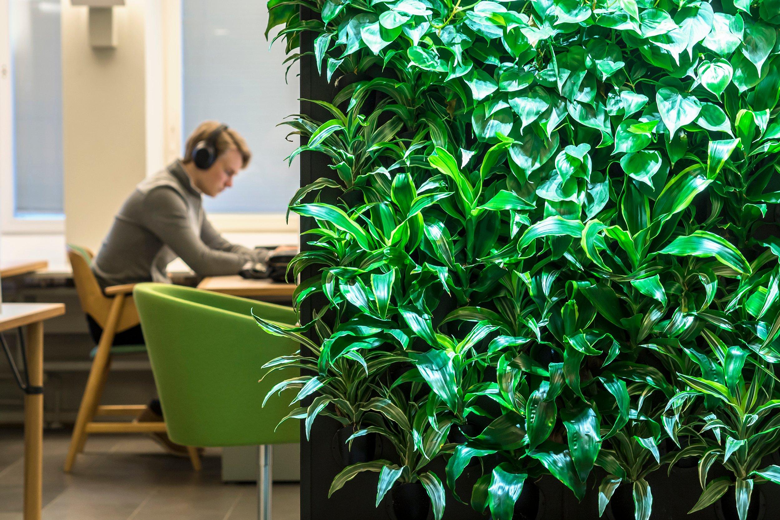Naava greenwall at Hanken School of Economics