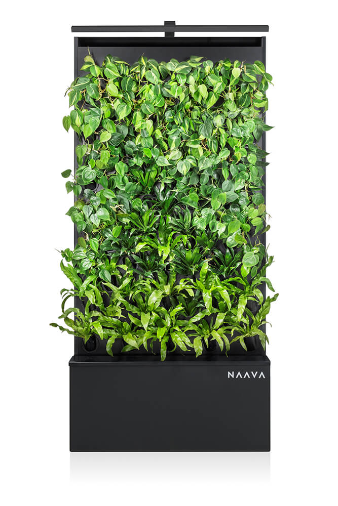 Graphite colored Naava One Green Wall from ahead