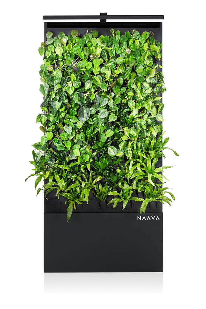 Graphite colored Naava One Slim Green Wall from ahead