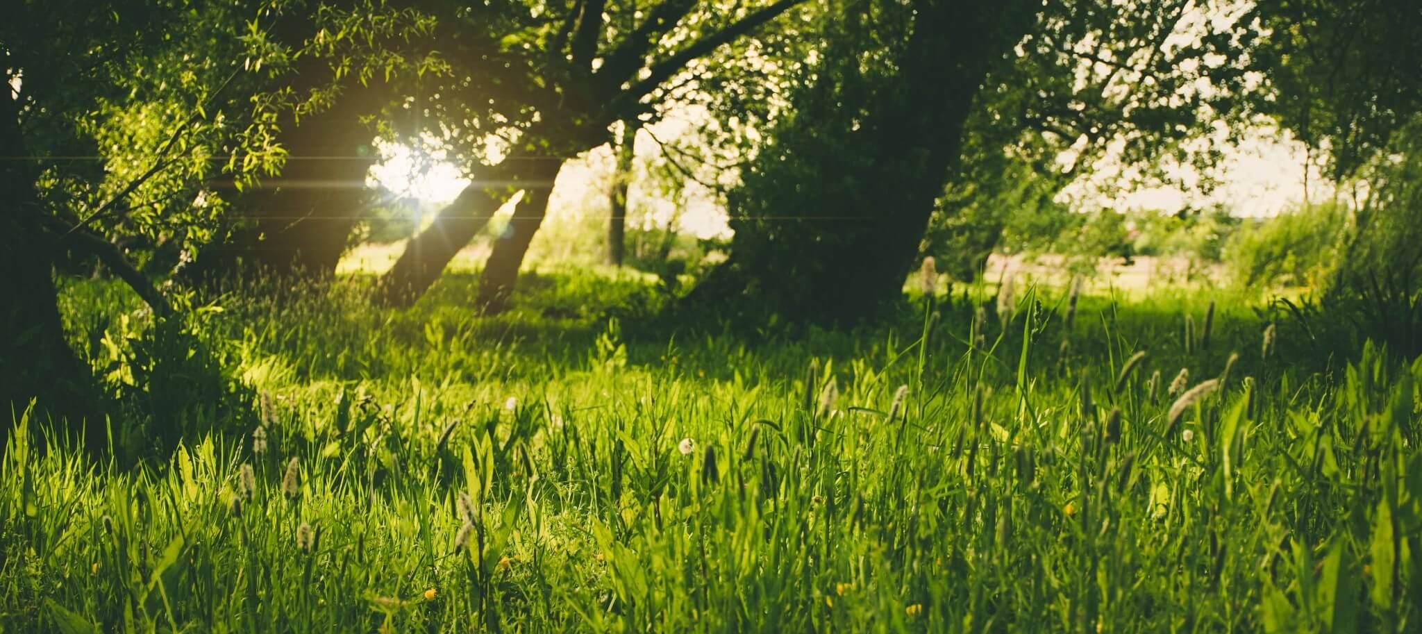 summer-grass-sunshine-hero.jpg