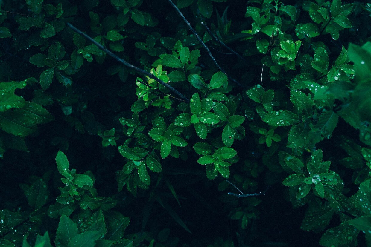 Plants can remove impurities in the air and help achieve a better indoor air quality.