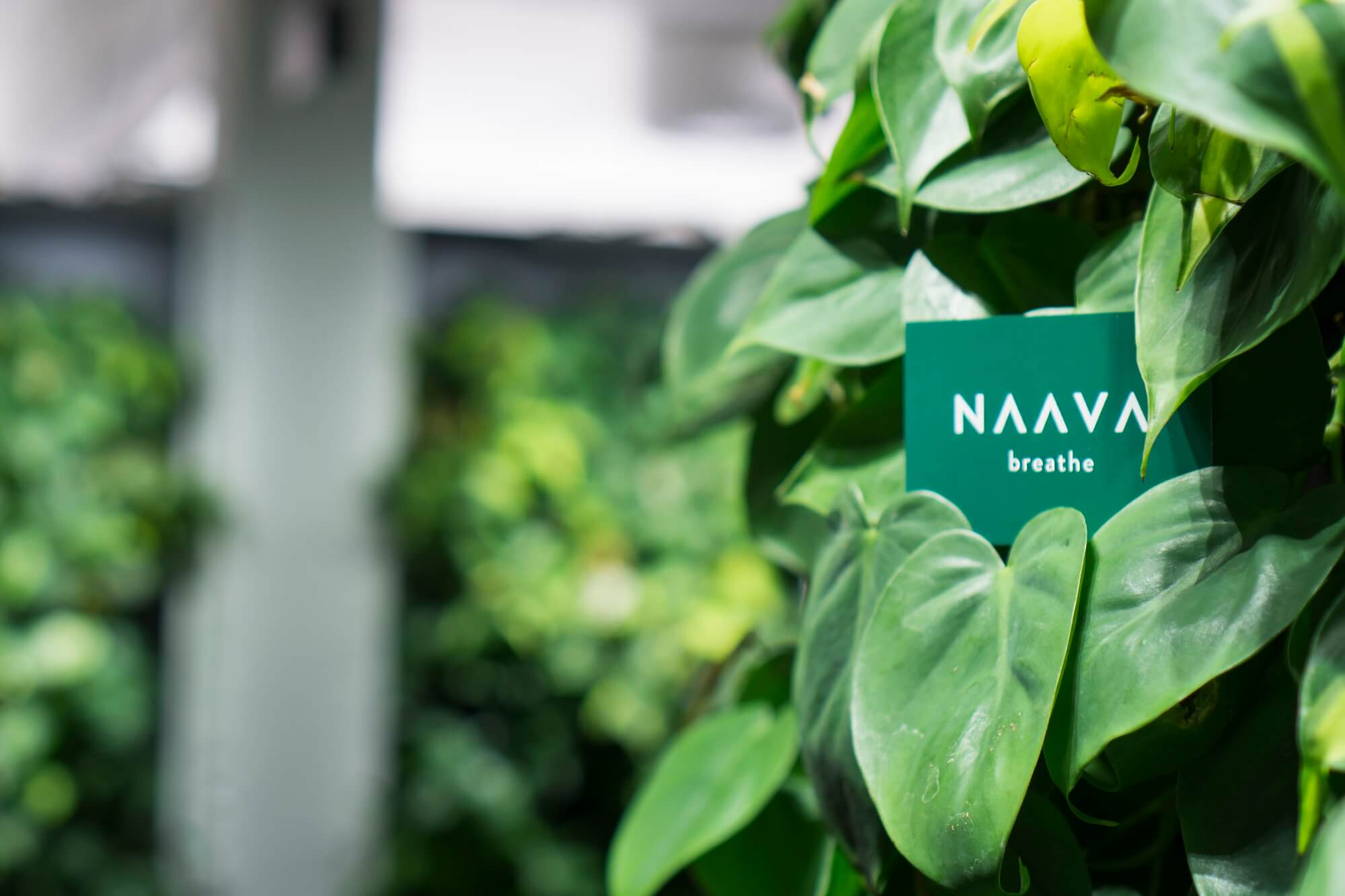 Naava-plants-greenwall.jpg