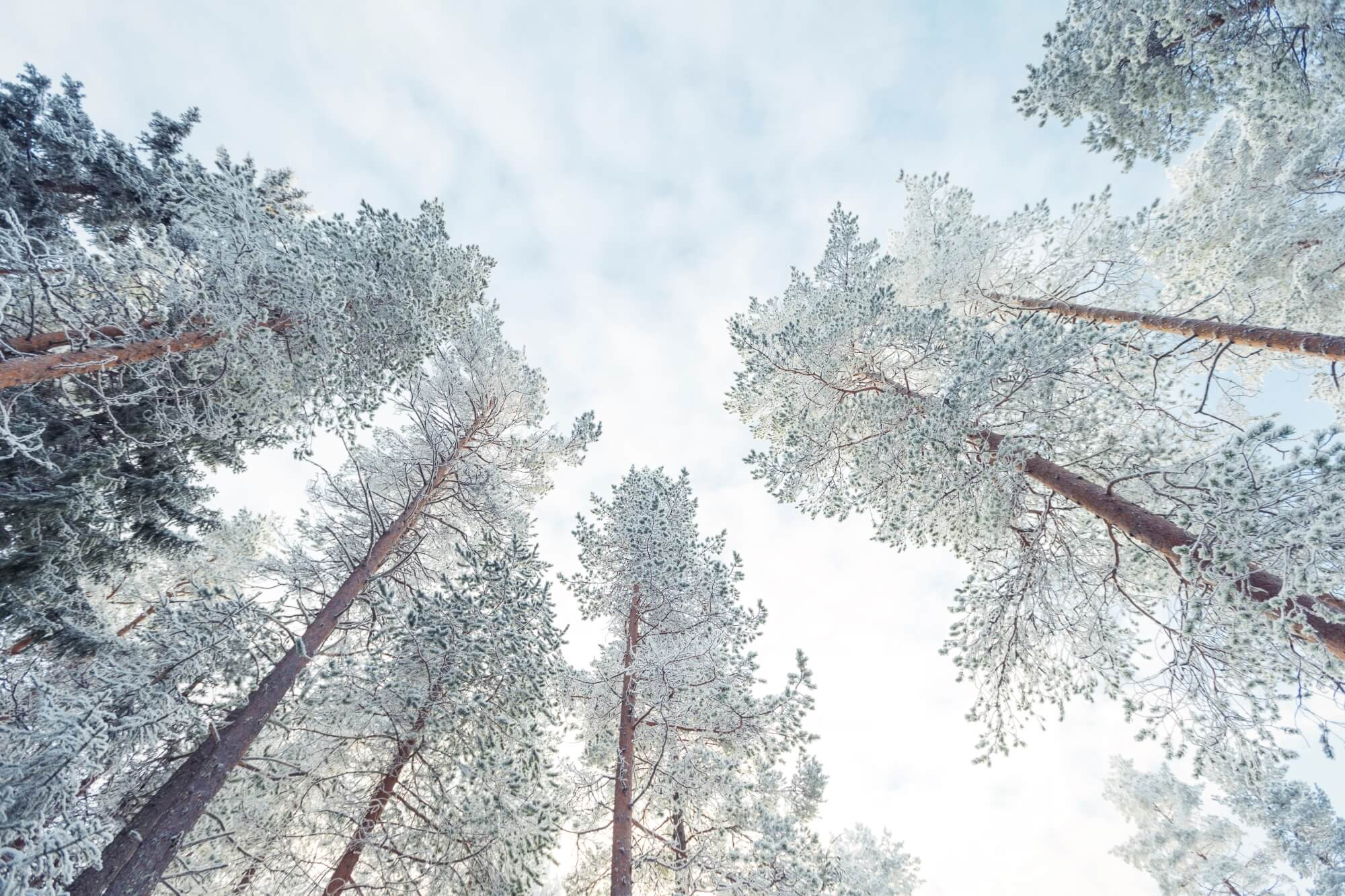 MissionVision_WinterForest_01.jpg