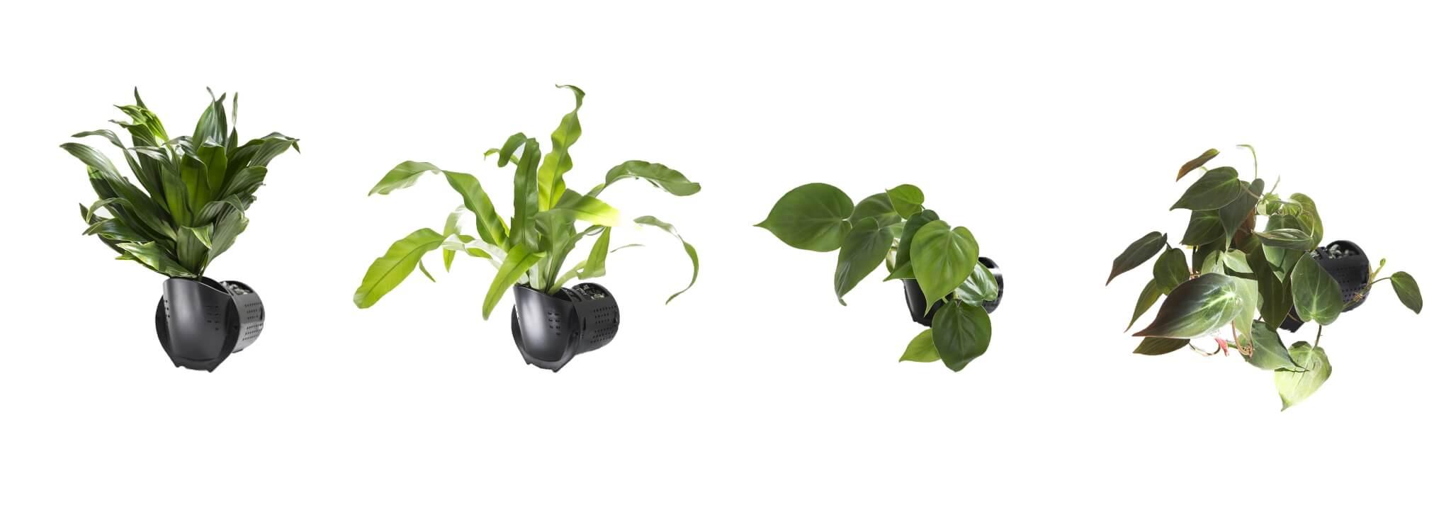 plants-hero
