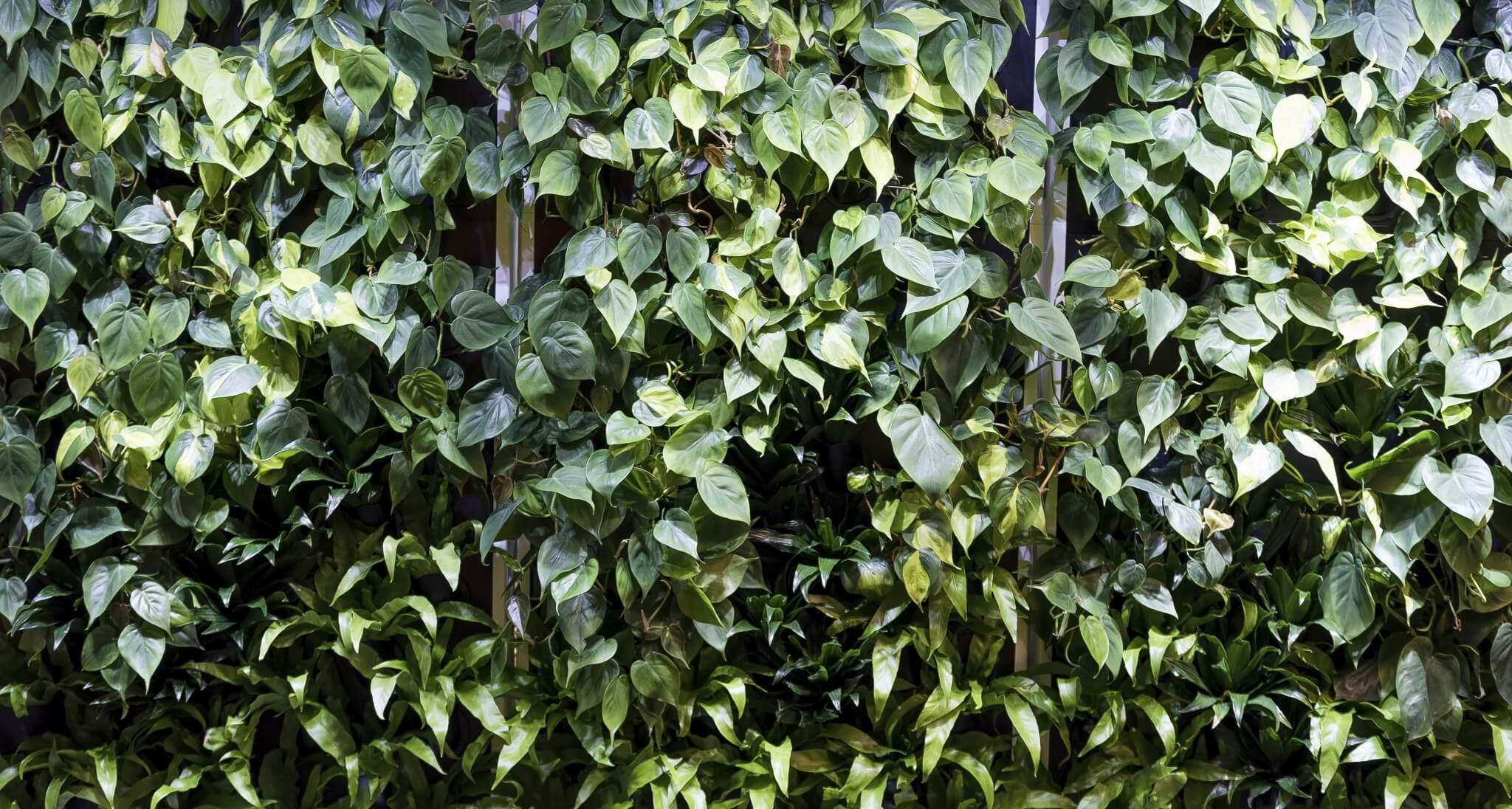 plant-wall-hero